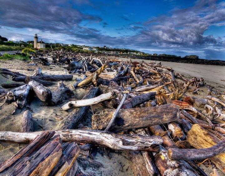 Driftwood And The Lighthouse - Thom Zehrfeld Photography