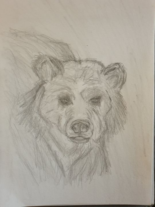 Curious Bear - K.T Sketches