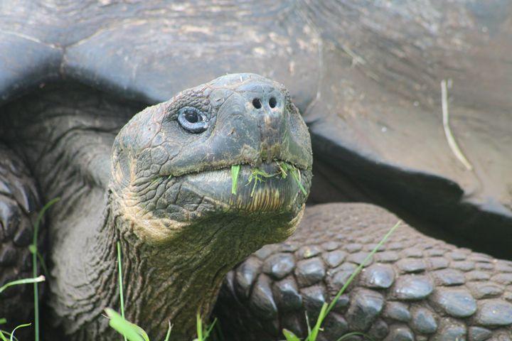Close up Tortuga - Betina Buchelli