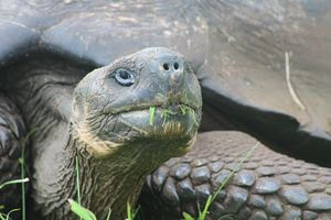 Close up Tortuga