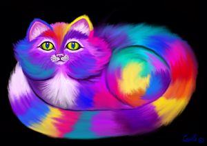 Rainbow Colored Cat