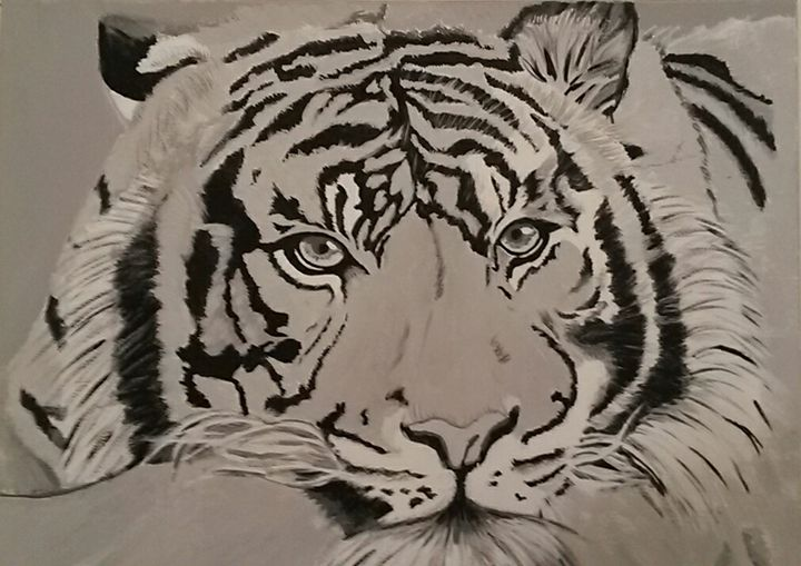 Tiger - Rorie's Gallery