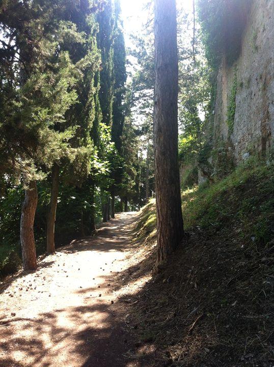 Pathway in Tuscany - Molly de Jong