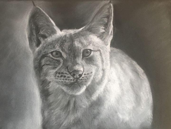 Lynx drawing - DanielBlacklockArt