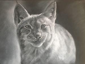 Lynx drawing