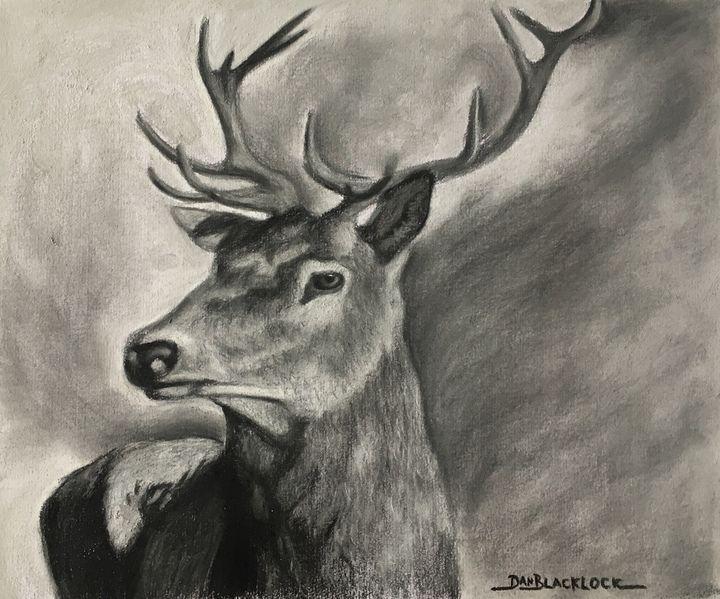 Deer drawing - DanielBlacklockArt