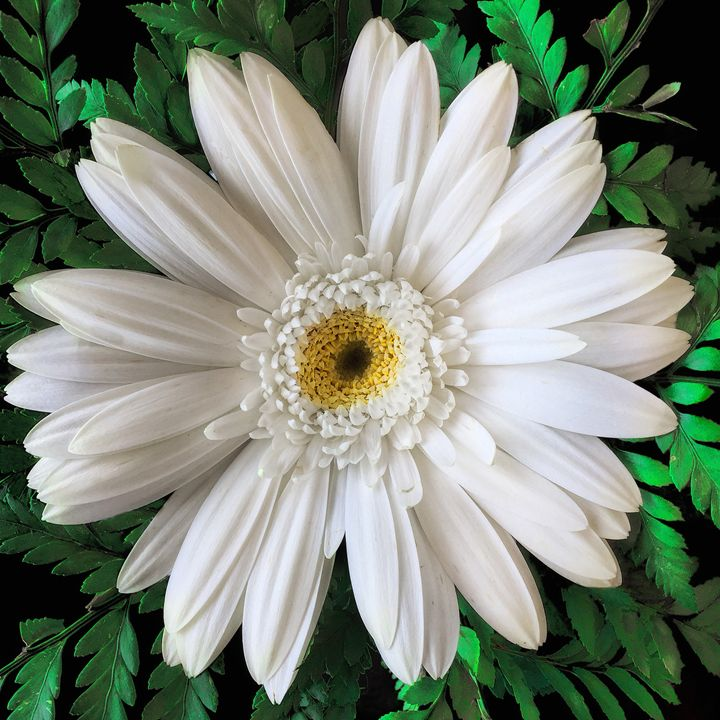 Delicate White Flower - Vision & Light Photography