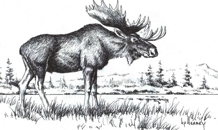 Bull Moose - Heaney Art Gallery