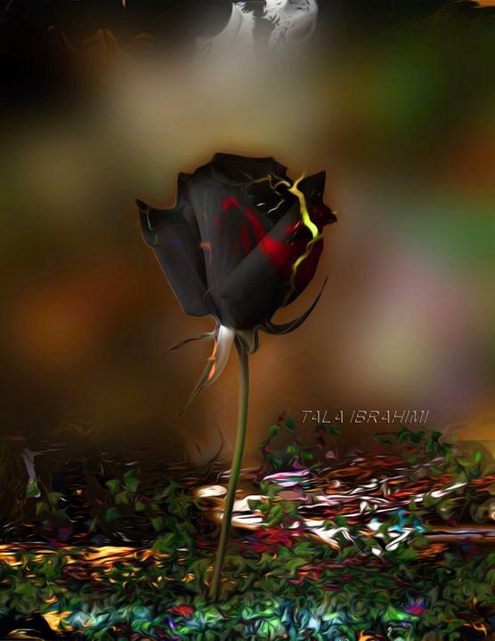 black rose - Tala Ibrahimi