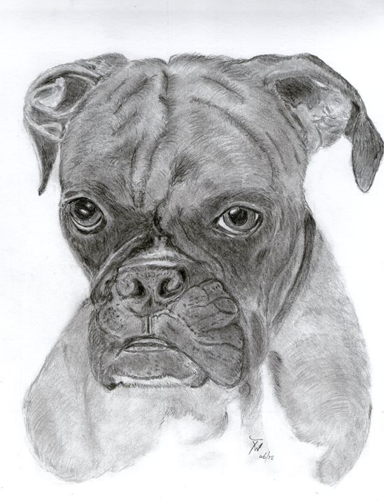 Boxer - Anthony Wickens, The Pet Artist