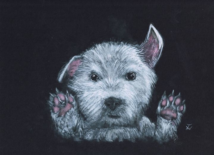 Boo - Anthony Wickens, The Pet Artist