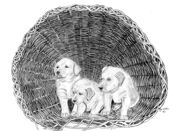The Basket - Anthony Wickens, The Pet Artist