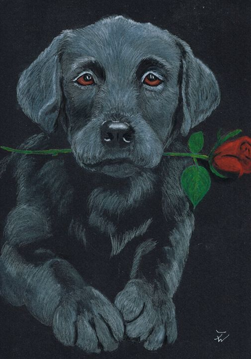 Rose - Anthony Wickens, The Pet Artist