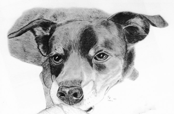 Scampee-do - Anthony Wickens, The Pet Artist