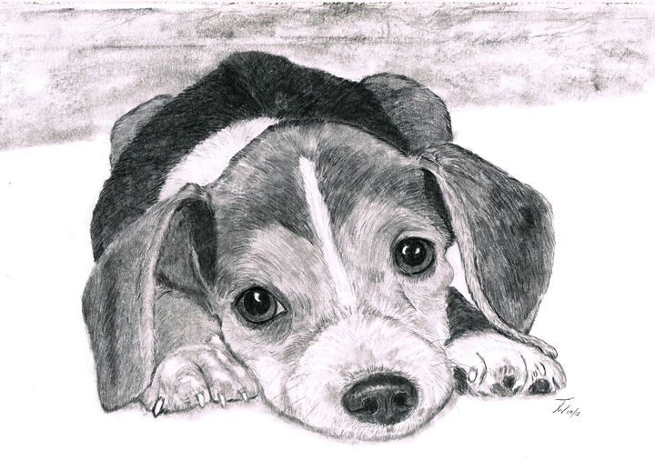 Beagle Pup - Anthony Wickens, The Pet Artist