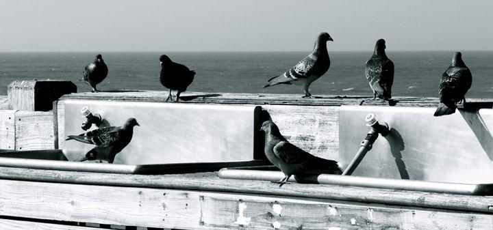 Pigeons on the Pier - AK Arts