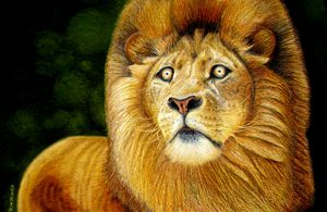 Golden Eyed African Lion