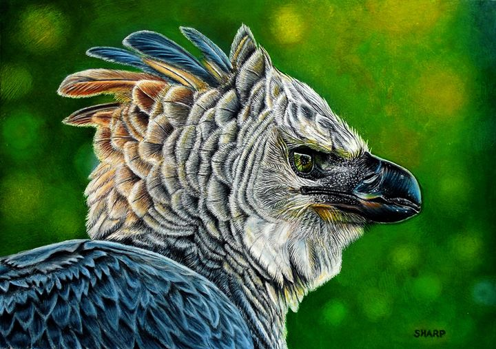 Harpy Eagle - Wildlife Art by Karen Sharp