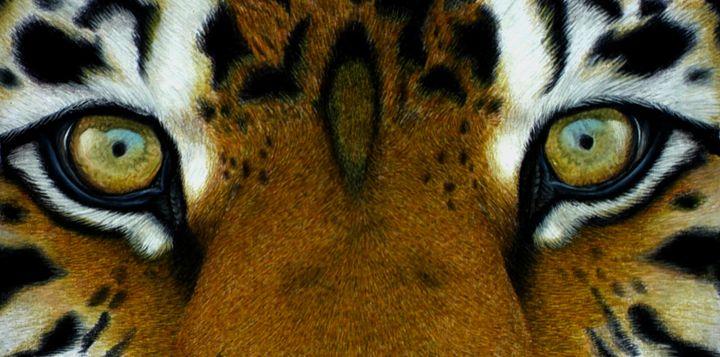 Tiger Eyes - Wildlife Art by Karen Sharp