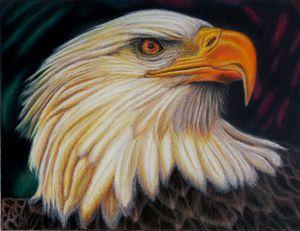 Eagle at Sunset - Wildlife Art by Karen Sharp