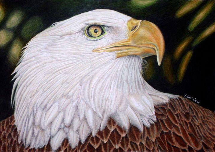 Freebird - Wildlife Art by Karen Sharp