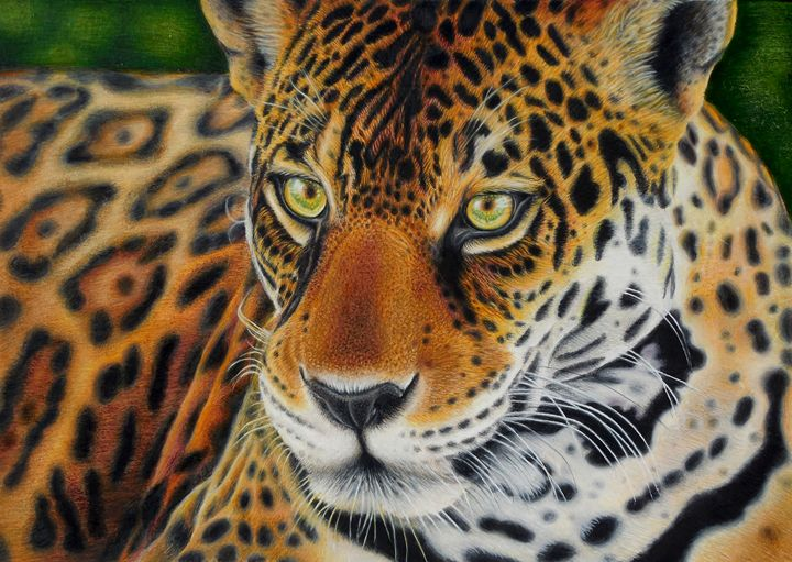 Charming South American Jaguar   Wildlife Art By Karen Sharp