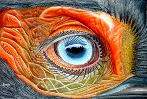 Eye of an African Hornbill