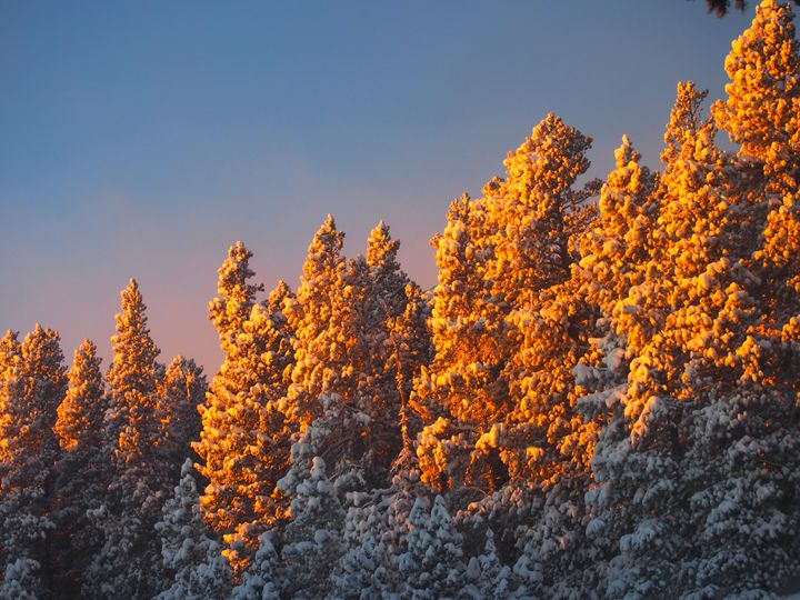 Sunset on snow covered pines - Dark Forest Creature - photography and painting