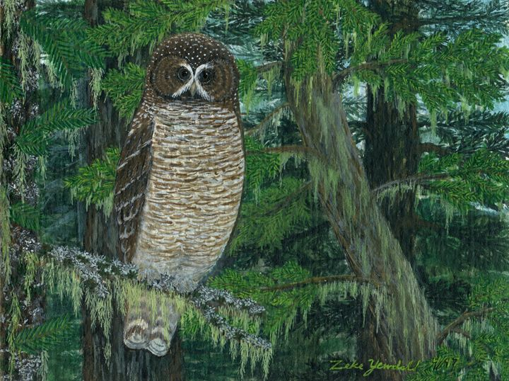 Spotted Owl - Dark Forest Creature - photography and painting