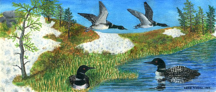 Common Loons - Dark Forest Creature - photography and painting