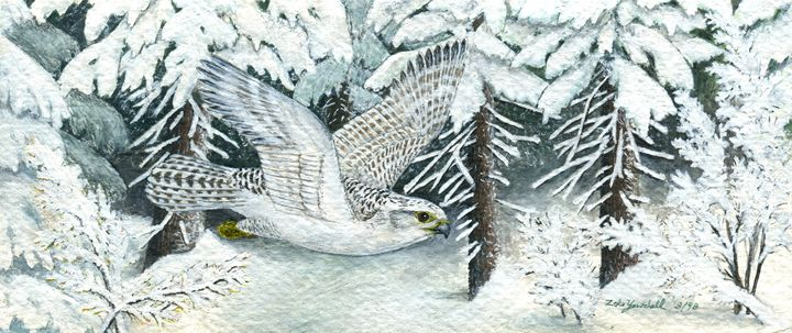 Gyrfalcon - Dark Forest Creature - photography and painting