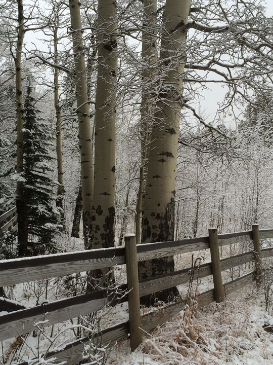 Snowy Aspen trees and fence - Dark Forest Creature - photography and painting