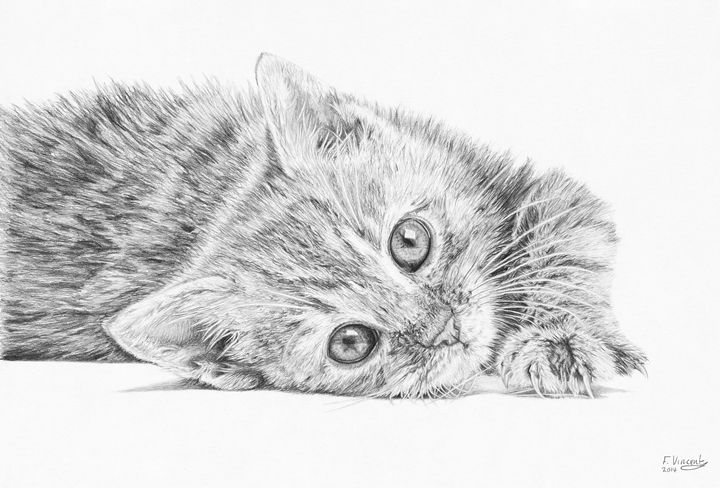 Curious Kitten - Frances Vincent Arts