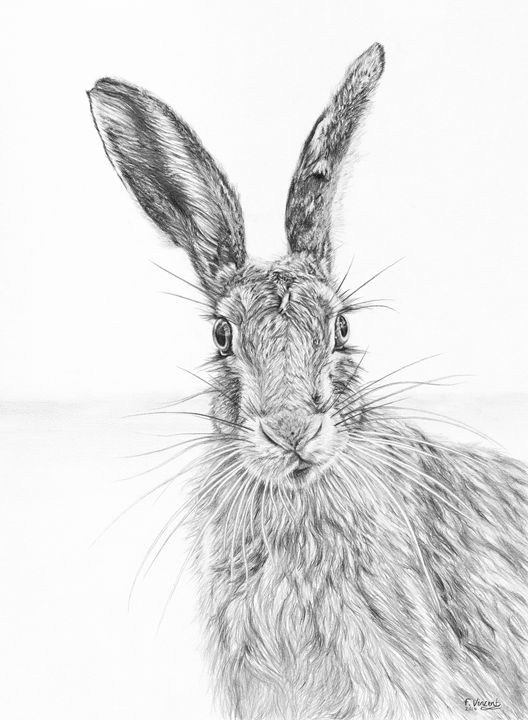 Stare of the Hare - Frances Vincent Arts