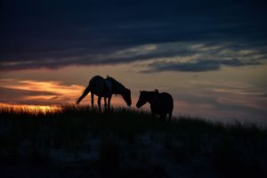 Graze with Me: Horse Pair - Doodles and Photos by Michele Wish