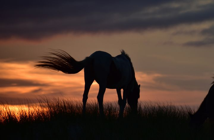 Horse Tail Silhouette - Doodles and Photos by Michele Wish