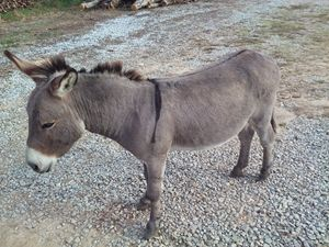 Donkey - NEEDED ART BY LENA