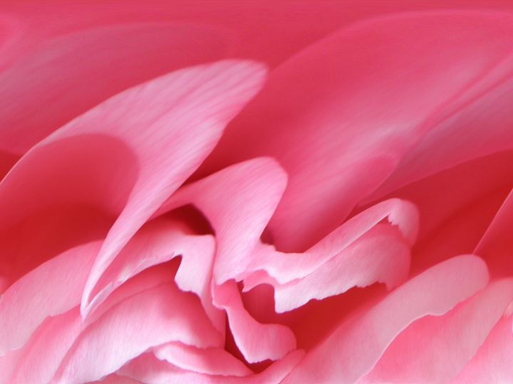 Flowing Pink - Photography by Trisha Allard