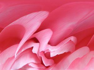 Flowing Pink