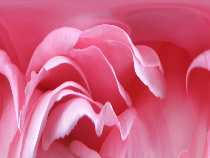 Pink Waves - Photography by Trisha Allard