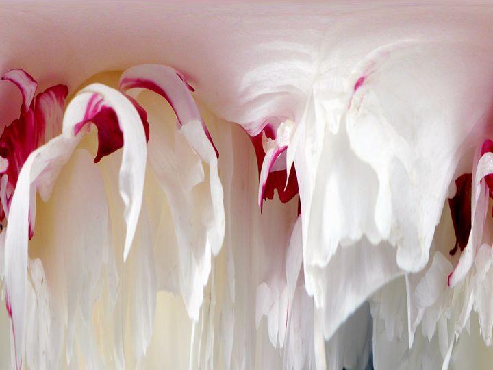 Peoney Abstract - Photography by Trisha Allard