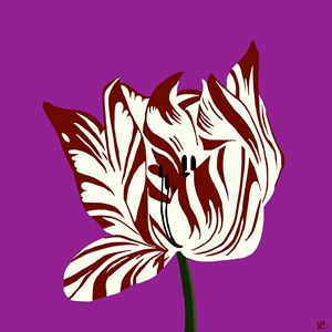 The Tulip - on Purple