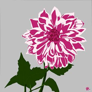 The Dahlia - In Pink