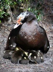 Safe Under Momma's Wings