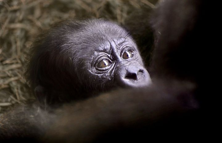 Looking Into His Mommy's Eyes - RMB Photography