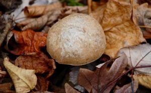Mushroom in the Fall