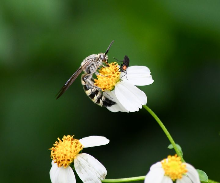 The Wasp and the Lovebug - RMB Photography