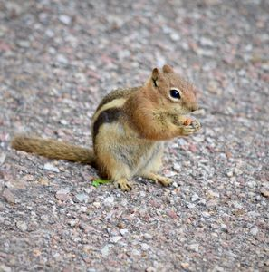 Super Snacking Squirrel Sweetness