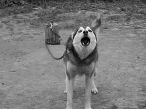 Barking Bandit