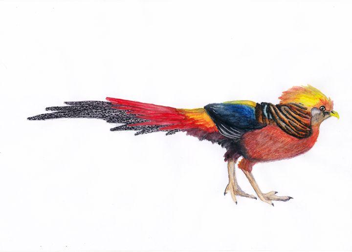 Golden Pheasant - Agnieszka Guniek Baradziej